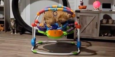 Katze springt auf Babywippe und begeistert über 4,8 Millionen Menschen