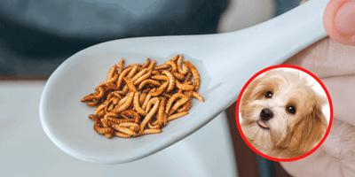 Insektenhundefutter: Eine umweltfreundliche Alternative im Hundenapf?