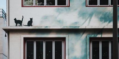 Mężczyzna obserwował koty sąsiada. Nagle zdał sobie sprawę, że musi natychmiast wezwać policję