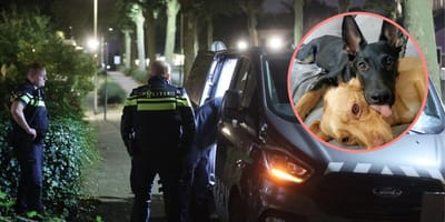 Tieners gooien zwaar vuurwerk naar hond in tuin Zoetermeer