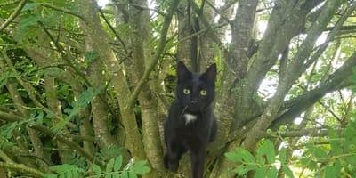 Na tym zdjęciu są dwa koty: tylko najbystrzejsze oko potrafi je dostrzec!