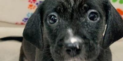 Cuccioli abbandonati:  i loro escrementi spaventano i soccorritori