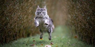 Epische kattennamen: voor de échte waaghalzen en krijgers
