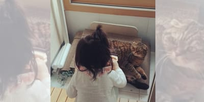 Niña coreana no sabía que al gato no le gusta que lo cepillen: su reacción es demasiado graciosa