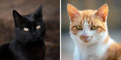 ¿El color del gato determina su personalidad?