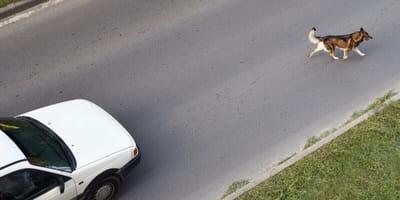 Hund läuft vor sein Auto: Beim Tierarzt erlebt er sein blaues Wunder!
