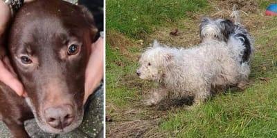 Zwaar verwaarloosde honden gevonden bij illegale fokker