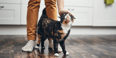 10 things cats absolutely love