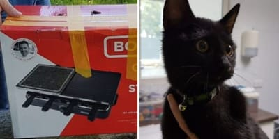 """Politie zoekt getuigen: """"kat zat in een dichtgeplakte doos zonder luchtgaten"""""""