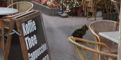 In één gemeente 173 katten gevangen: dierenambulance spreekt van kattenplaag