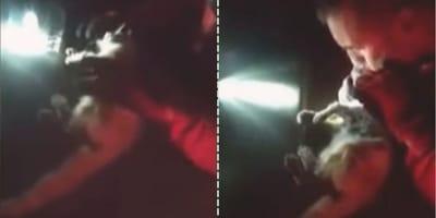 Soldado resucita a un gatito que había inhalado humo de volcán (Video)