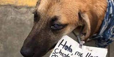 Pies błąka się po targowisku. Do obroży ma przypiętą rozpaczliwą wiadomość