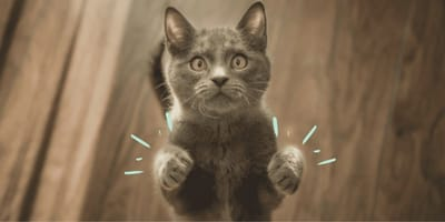 ¿Cuántos dedos tiene tu gato? ¡Podrías tener un michi muy especial en casa!