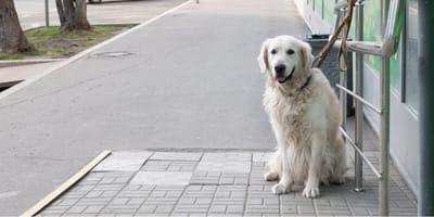 Pies pozostawiony pod sklepem. Kiedy klienci wychodzą robi coś, co sprawia, że każdy zawraca (wideo)