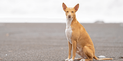Drone search for dogs trapped by La Palma lava: Have the dogs been found?
