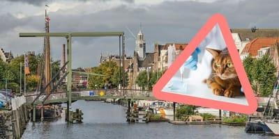 Goed nieuws: tijdelijk gratis chip voor Rotterdamse katten