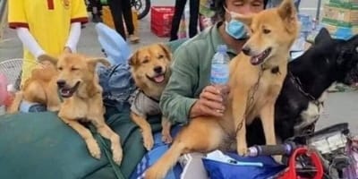 Twitter slaat op hol nadat 15 onschuldige honden worden afgemaakt