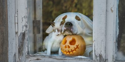 Peligros de Halloween para perros y gatos que los dueños no conocen