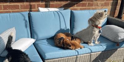 Perro en silla de ruedas se vuelve guía y amigo de una zorrita ciega