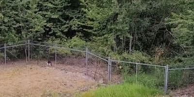Gato vigila tras la valla: cuando una sombra aparece de la nada, ¡ataca! (Vídeo)