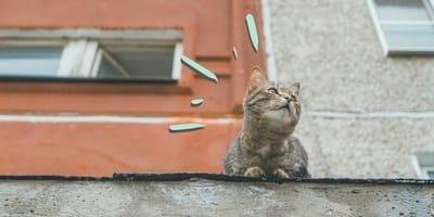 Un gato llegó a mi casa y no se quiere ir, ¿qué hago?