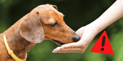 Gefängnis und 23.000 Euro STRAFE für alle, die ihrem Hund DAS füttern!