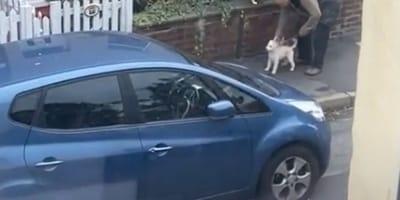 Se asoma a la ventana y ve a un hombre con su perro: lo que está haciendo le encoge el corazón (Vídeo)