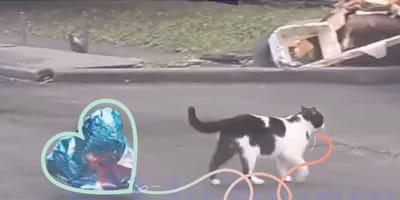 Gato encuentra un corazonzote y de inmediato se lo lleva a su amor (Video)