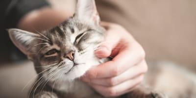 Mit einer Katze zu leben, ist gut für die Gesundheit