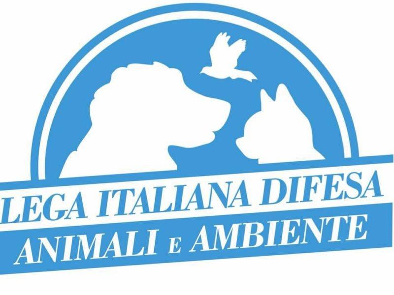 Logo dell'associazione Leidaa
