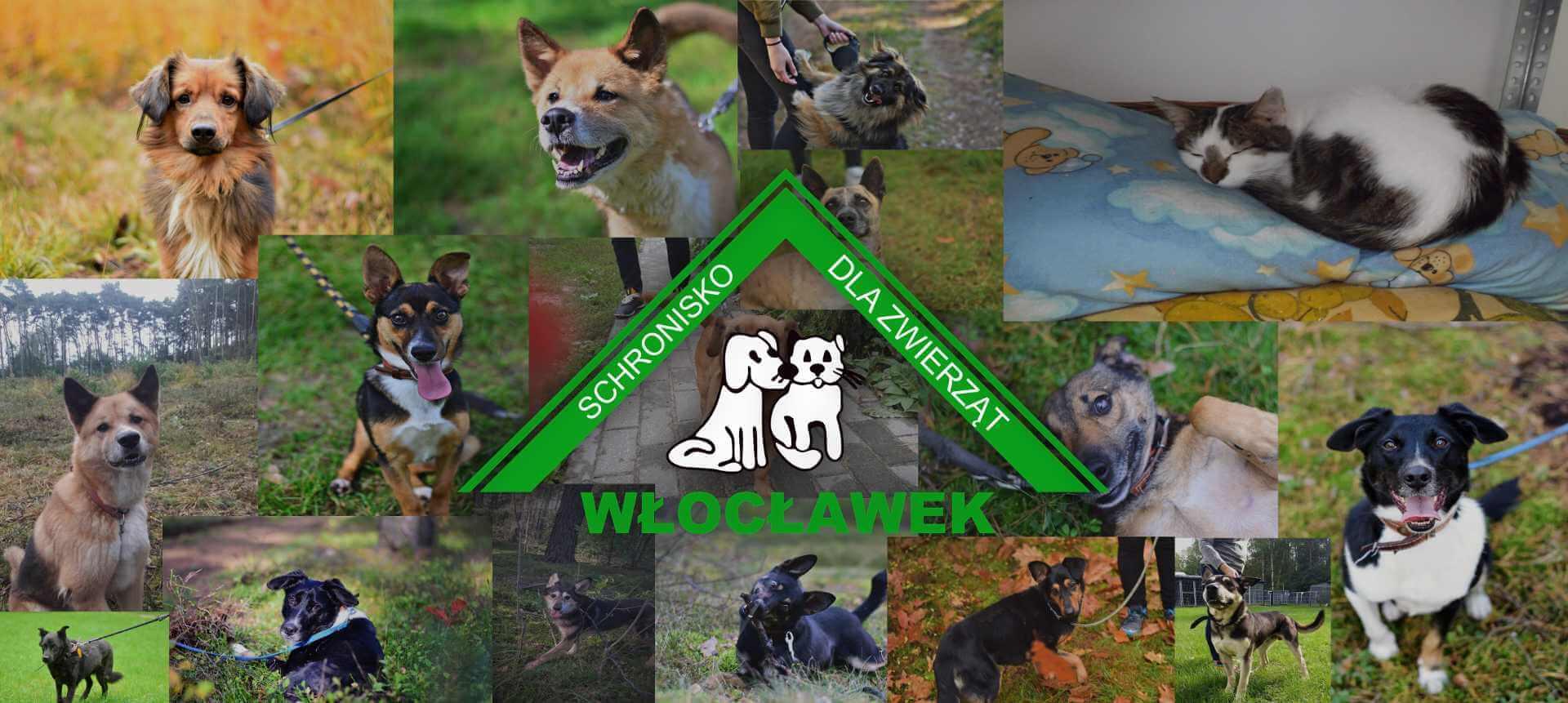 Logo Schronisko dla zwierząt Włocławek